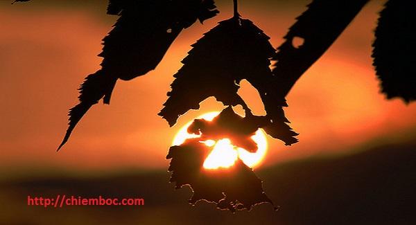 Xem Tử vi phương đông thứ 5 ngày 30/11/2017 của 12 Con giáp