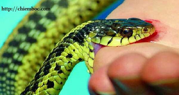 Nằm mơ bị rắn cắn báo hiệu điềm gì?