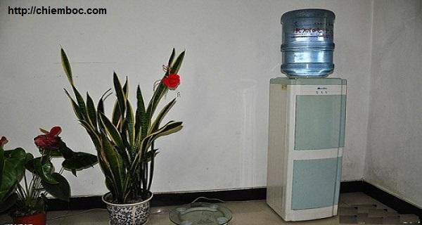 Khéo đặt bình uống nước, tài lộc gia tăng không ngừng