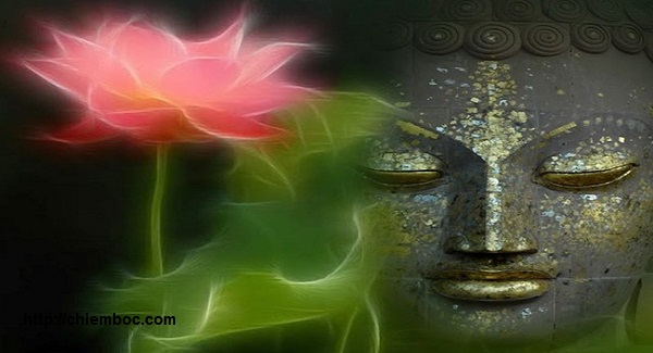 Vì sao Đức Phật, Bồ Tát ngồi trên hoa sen mà không phải loài hoa khác?