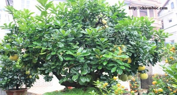 Bí quyết trồng cây theo phong thủy để gia đình yên ấm, tiền tài đến nhà
