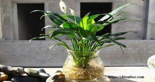 Lựa chọn thực vật phù hợp với vị trí công tác giúp năm mới sự nghiệp tăng tiến không ngừng