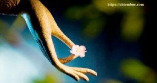 Lắng nghe Lời Phật dạy về phước đức - cốt lõi của sự giàu có