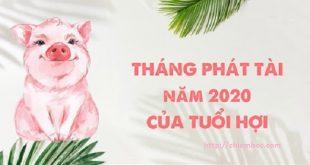 Tháng phát tài 2020 của tuổi Hợi: Tiền tiêu không phải nghĩ