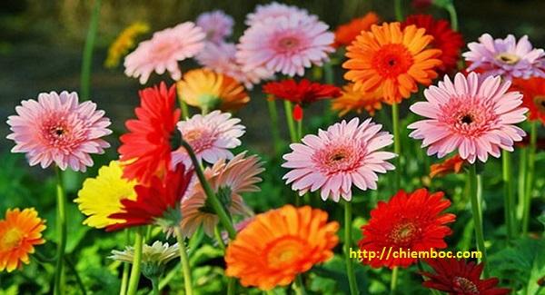 Loại hoa đặt phòng khách hợp phong thủy, may mắn giàu sang ùa tới