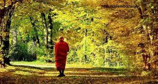 Đời người càng vô ưu, không toan tính thì càng được hưởng đại phúc
