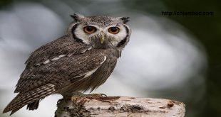 Mơ thấy chim ưng, mơ thấy cú, mơ thấy hạc điềm báo tốt hay xấu?