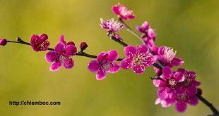 Những cấm kị phong thủy trong tiết Lập Xuân