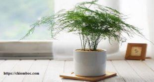 Cây phong thủy trong nhà: Tổng hợp 50 loại cây cát tường vượng vận tăng phúc