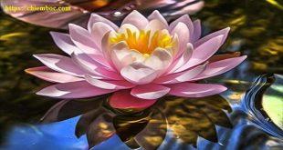 7 lý do người có lòng khoan dung nhất định sẽ thành công