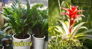 12 con giáp nên trồng cây gì?