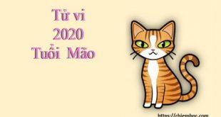 Tử vi tuổi Mão năm Canh Tý 2020: Thị phi dồn dập, tin vui cũng tới tấp báo về